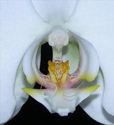 Vuelos Baratos a Mexico: admira sus bellas orquideas